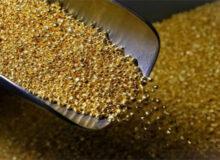هدفگذاری تولید ۸/ ۱ تن طلا در سال آینده