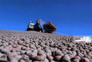 رشد بیسابقه تولید گندله در فولاد سنگان